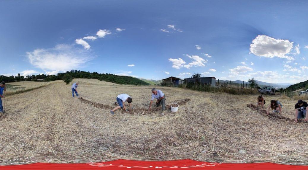 20170723 pano Estrazione dei bulbi di zafferano dal terreno